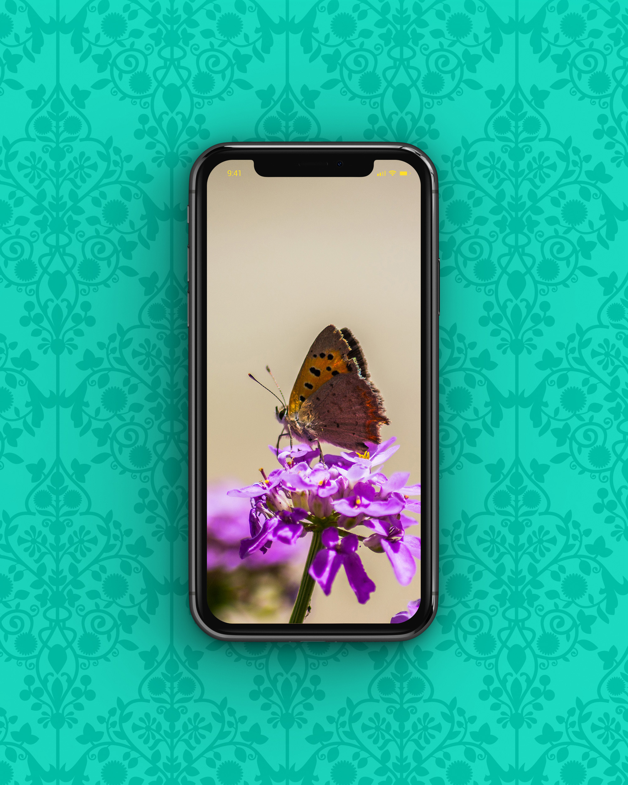 free wallpapers for your phone